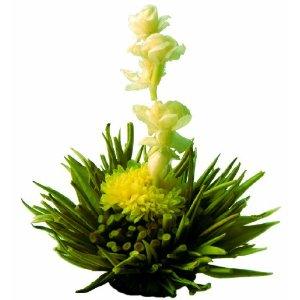 kvetouci2.jpg
