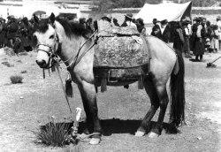 tibet_pony.jpg